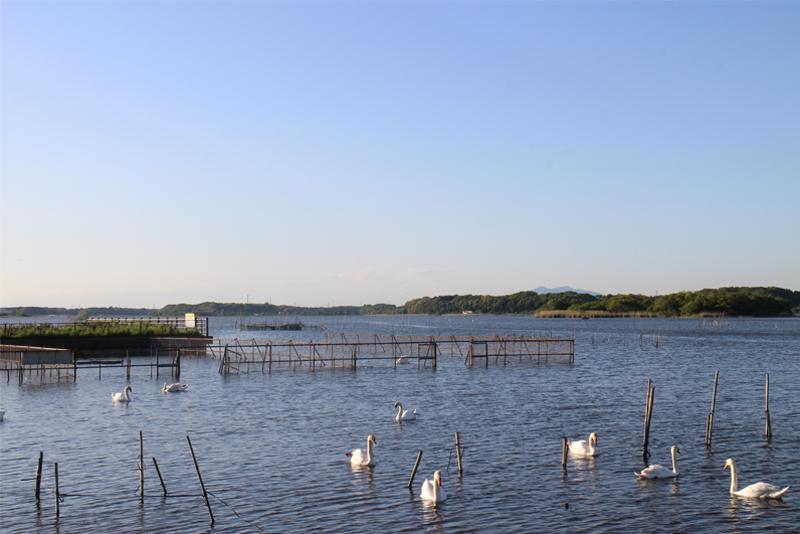 牛久沼水辺公園