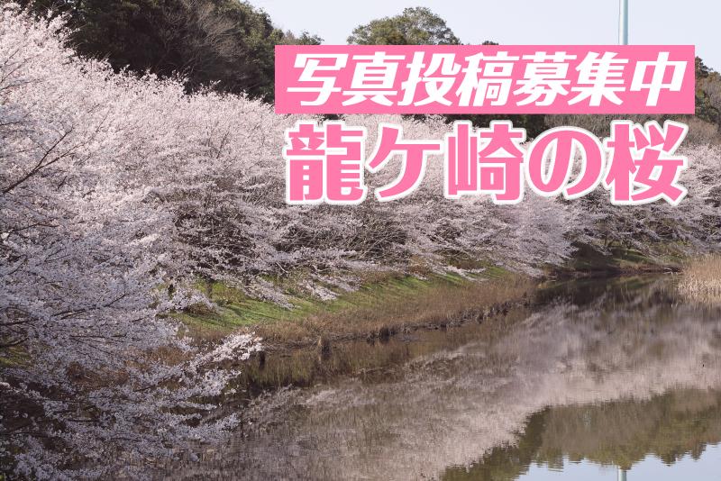 【投稿募集】龍ケ崎の桜を写真で投稿しよう!2020