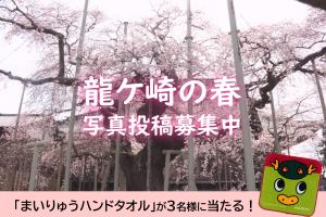 【投稿募集】龍ケ崎の春を写真で投稿しよう!2021