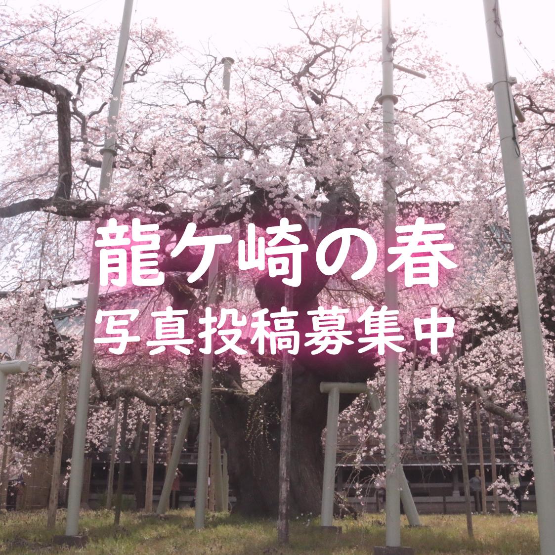 龍ケ崎の春を写真で投稿しよう!